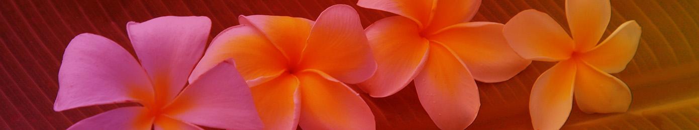 Strengthening Hawaii's Communities