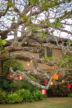 Kamani-tree-and-lanterns.jpg